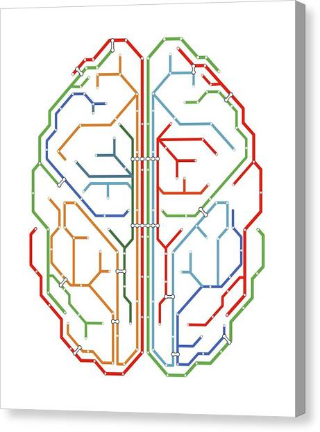 Brain Canvas Print by Alfred Pasieka