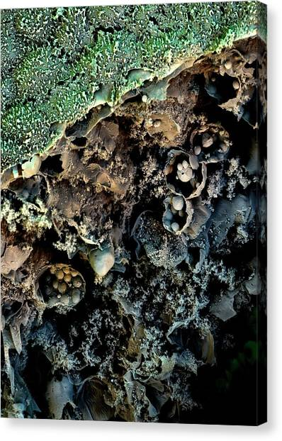 Broccoli Canvas Print - Broccoli by Stefan Diller