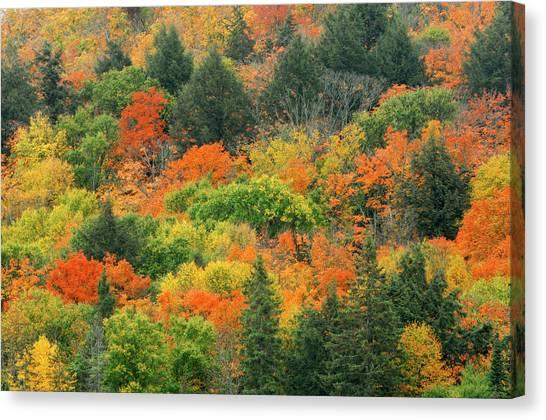 Algonquin Park Canvas Print - Canada, Ontario, Algonquin Provincial by Jaynes Gallery