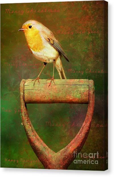 Christmas Robins Canvas Print