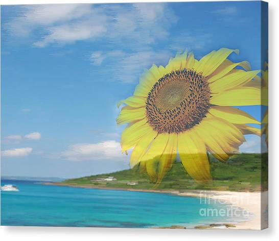 Sunflower Facing The Oceans  Canvas Print