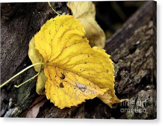 Fall Canvas Print by Rick Rauzi