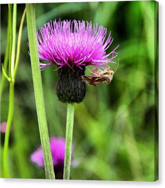Insects Canvas Print - Flower by Luisa Azzolini