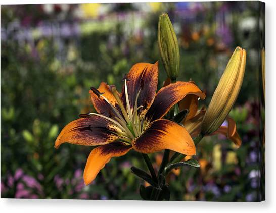 Flower Canvas Print by Sanjeewa Marasinghe