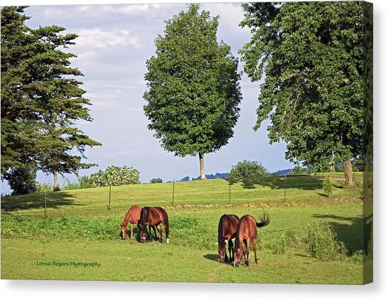 4 For Lunch Canvas Print