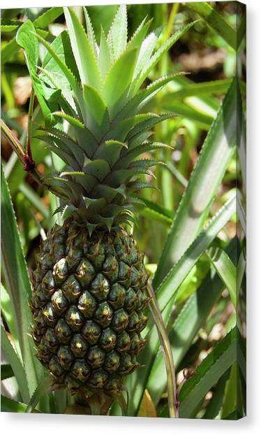 Bromeliad Canvas Print - French Overseas Territory, Reunion by Cindy Miller Hopkins