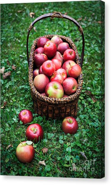 Fruit Baskets Canvas Print - Basket Full Of Fresh Picked Apples by Edward Fielding