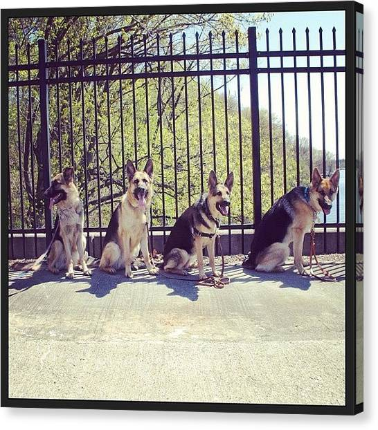 German Shepherds Canvas Print - 4 #german #shepherds In A Row by Eleanor Abramson