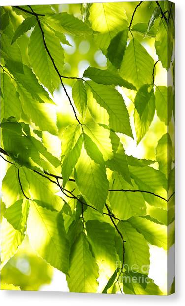 Rebirth Canvas Print - Green Spring Leaves by Elena Elisseeva