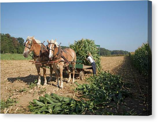 Harvest On An Amish Farm Canvas Print by Jim West