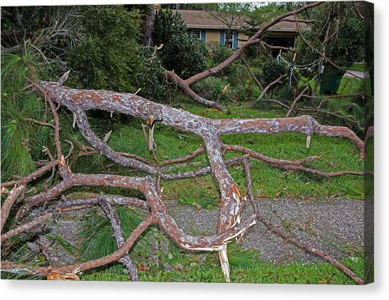 Hurricane Irma Residential Storm Damage Canvas Print by Millard H. Sharp