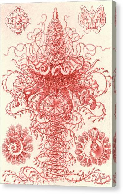 Illustration Shows Marine Invertebrates. Siphonophorae Canvas Print by Artokoloro