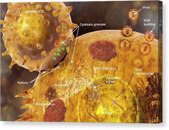 Immune Synapse Canvas Print by Carol & Mike Werner