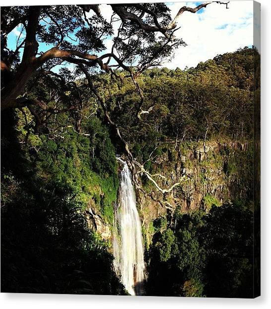 Rainforests Canvas Print - Lamington National Park, Green by Tony Keim