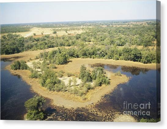 Okavango Swamp Canvas Print - Okavango Delta by Gregory G. Dimijian, M.D.