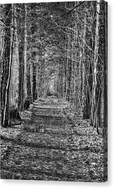 Canvas Print featuring the photograph Pathway by David Armstrong