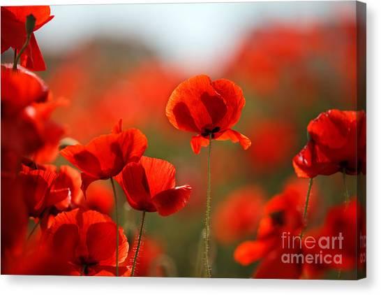 Botanical Garden Canvas Print - Poppy Dream by Nailia Schwarz