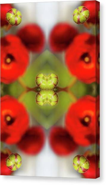 Red Ranunculus Canvas Print by Silvia Otte