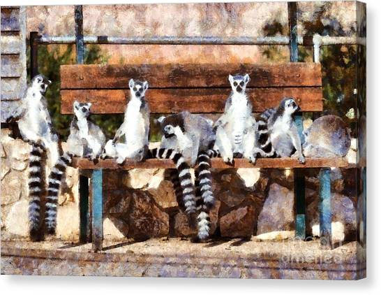 Ring-tailed Lemur Canvas Print - Ring Tailed Lemurs by George Atsametakis