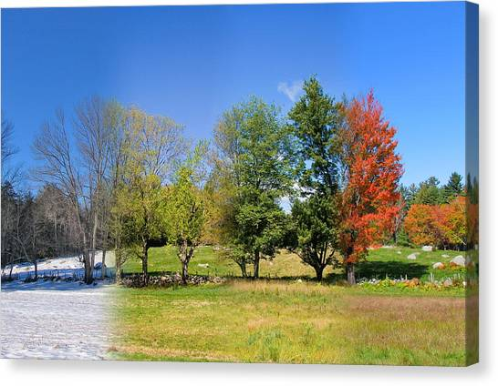 4 Season Trees In New Hampshire Canvas Print