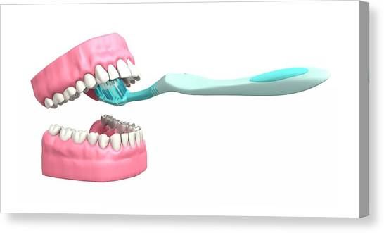 Toothbrush Canvas Print - Tooth Brushing Technique by Mikkel Juul Jensen / Science Photo Library