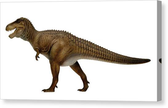 Tyrannosaurus Canvas Print - Tyrannosaurus Rex Model by Natural History Museum, London/science Photo Library