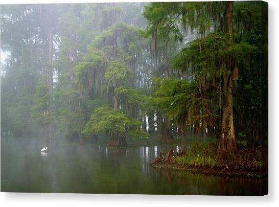 Great Cypress Canvas Print - Usa, Louisiana, Lake Martin by Jaynes Gallery