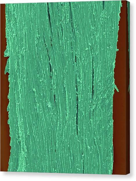 Floss Canvas Print - Waxed Dental Floss by Dennis Kunkel Microscopy/science Photo Library