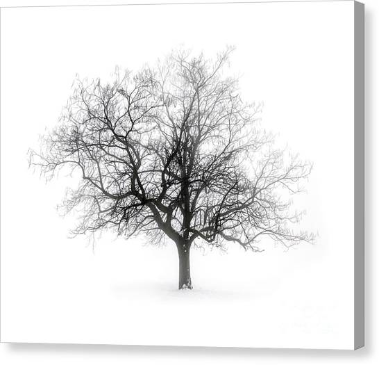 Gray Canvas Print - Winter Tree In Fog by Elena Elisseeva