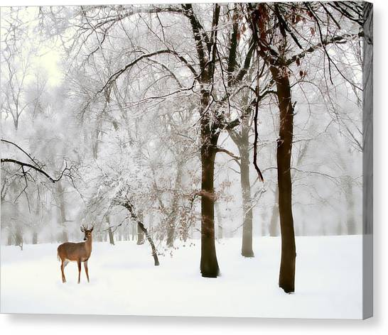 Winter Canvas Print - Winter's Breath by Jessica Jenney
