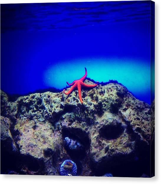 Submarine Canvas Print - Instagram Photo by Irina Popova