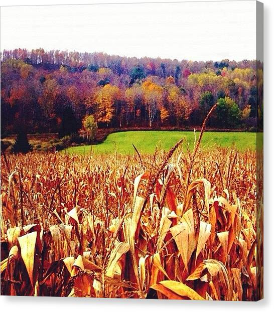Harvest Canvas Print - Untitled by Audrey Devotee