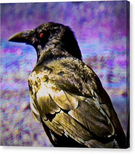 Ravens Canvas Print - Instagram Photo by Aaron Eckersley
