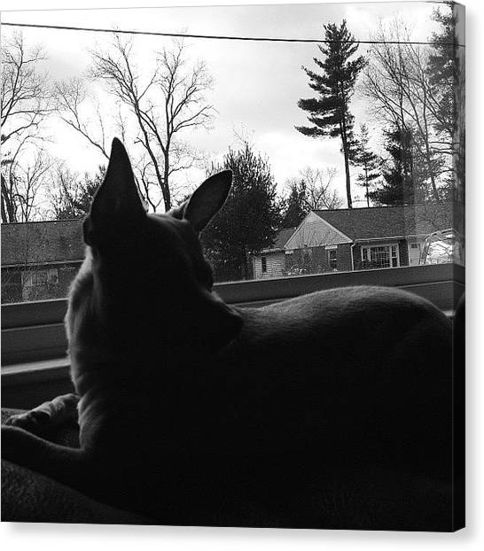 White House Canvas Print - Chihuahua Silhouette by Mel Garvin