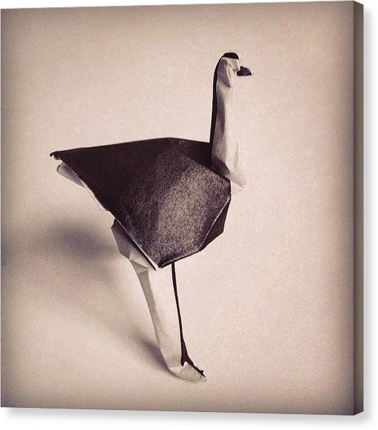 Ostriches Canvas Print - 42/365 - Paper Ostrich - Designed By by Ross Symons