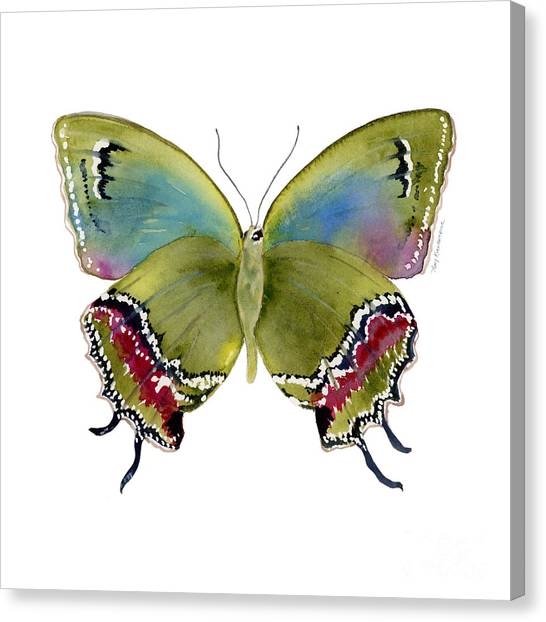 46 Evenus Teresina Butterfly Canvas Print