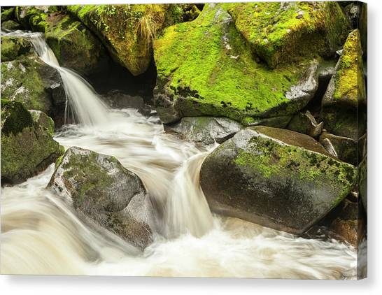 Tongass National Forest Canvas Print - Usa, Alaska, Tongass National Forest by Jaynes Gallery