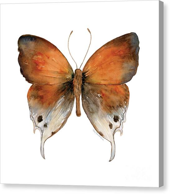 47 Mantoides Gama Butterfly Canvas Print