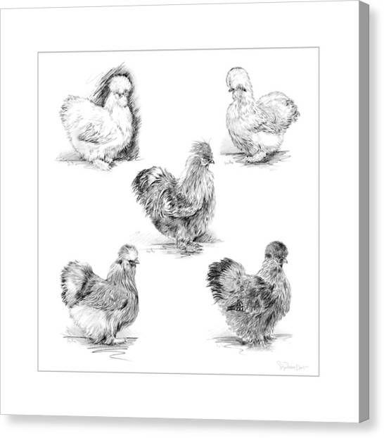 48. Silkies Pencil Drawing Canvas Print
