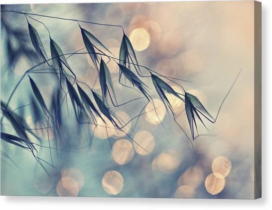 Grass Canvas Print - ...<<< by Dimitar Lazarov -