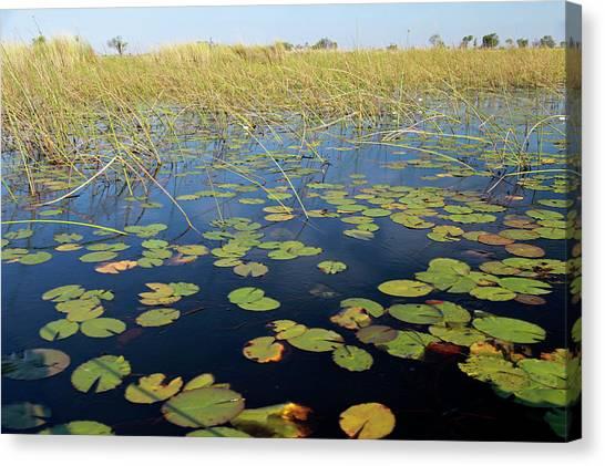Delta Canvas Print - Botswana, Okavango Delta by Kymri Wilt