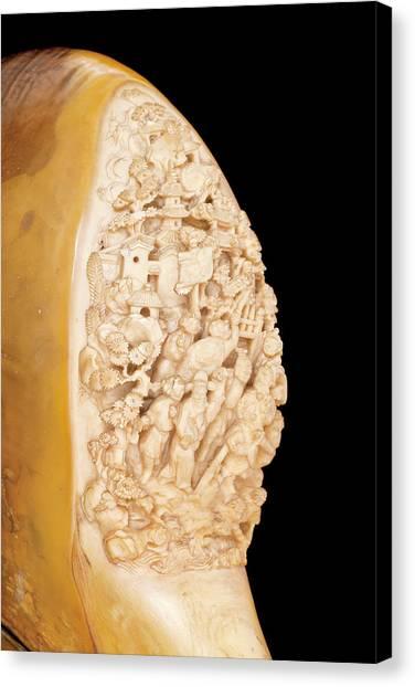 Hornbill Canvas Print - Carved Hornbill Skull by Natural History Museum, London