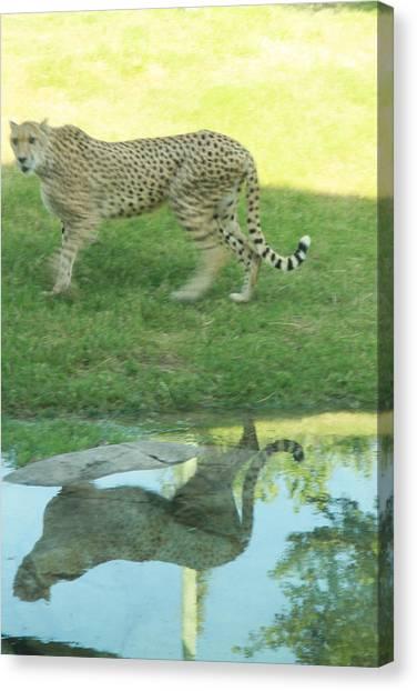 Cheetah Canvas Print by Tinjoe Mbugus