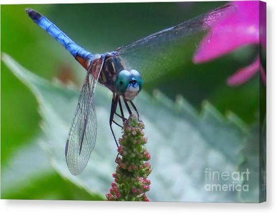 Dragonfly Blue Dasher Canvas Print