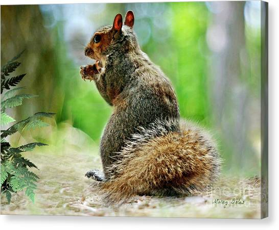 Harry The Squirrel Canvas Print