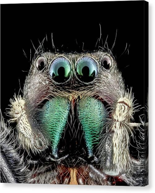 Spider Anatomy Canvas Prints Fine Art America