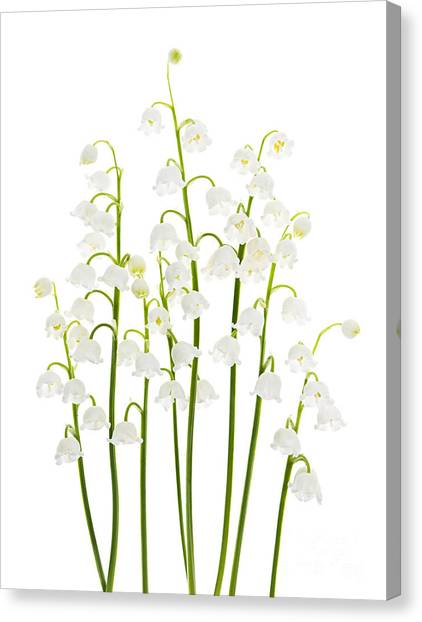 Floral Canvas Print - Lily-of-the-valley Flowers  by Elena Elisseeva