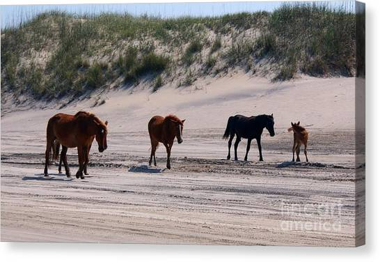 Wild Horse Canvas Print - Outer Banks Wild Horses by Mike Baltzgar