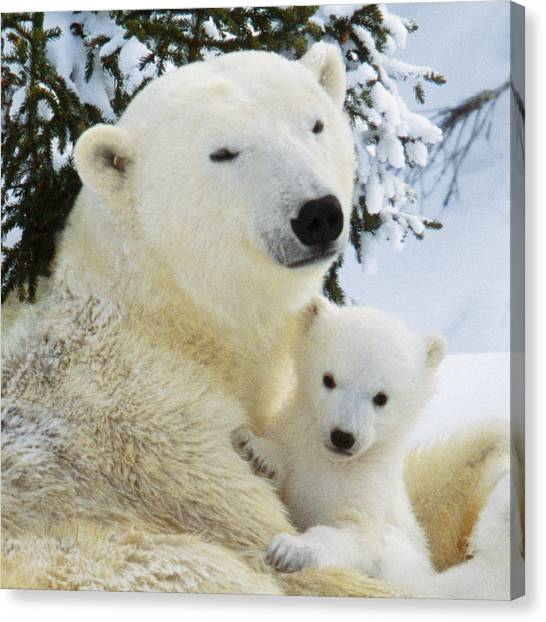 Care Bears Canvas Print - Polar Bear With Cub by M. Watson