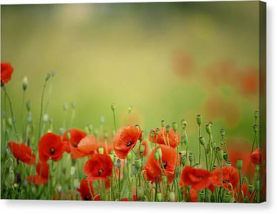Corn Field Canvas Print - Poppy Meadow by Nailia Schwarz